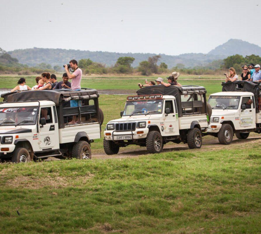 Hoe haal je het meeste uit je safari-vakantie?