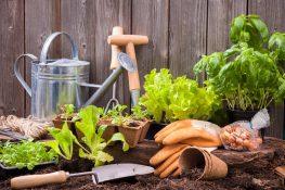 De top 6 boeken over tuinieren